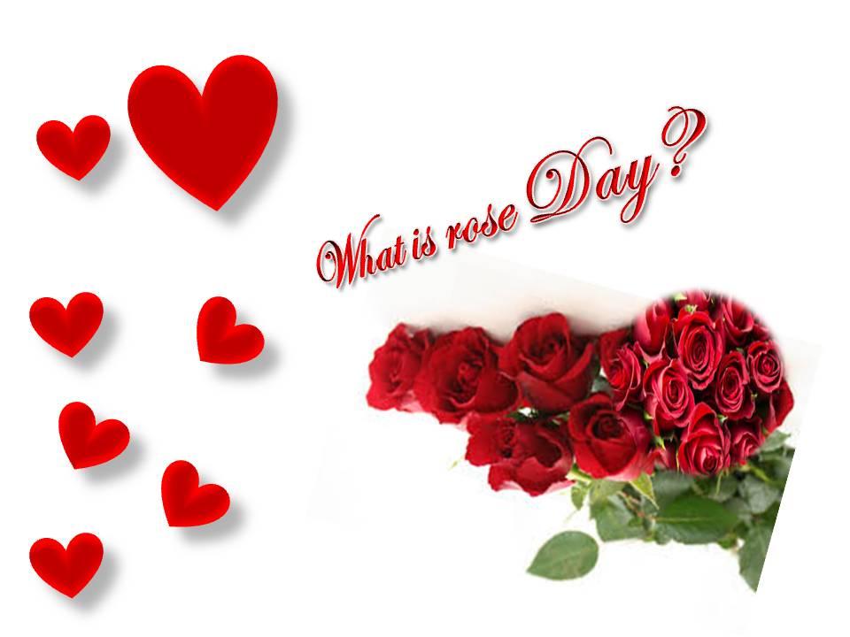 valentine week list 2020 what is rose day