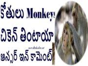Monkeys Eating Chicken or Not
