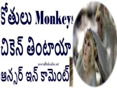 Monkeys Eating Chicken or Not