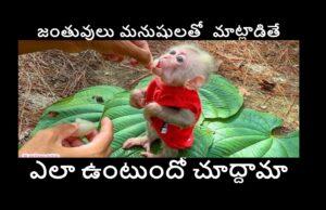 Latest Monkey Memes in Telugu