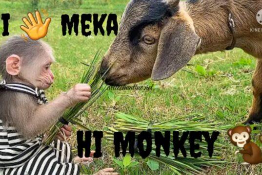 http://www.alltechonline.net/monkey-memes-in-telugu-2021/
